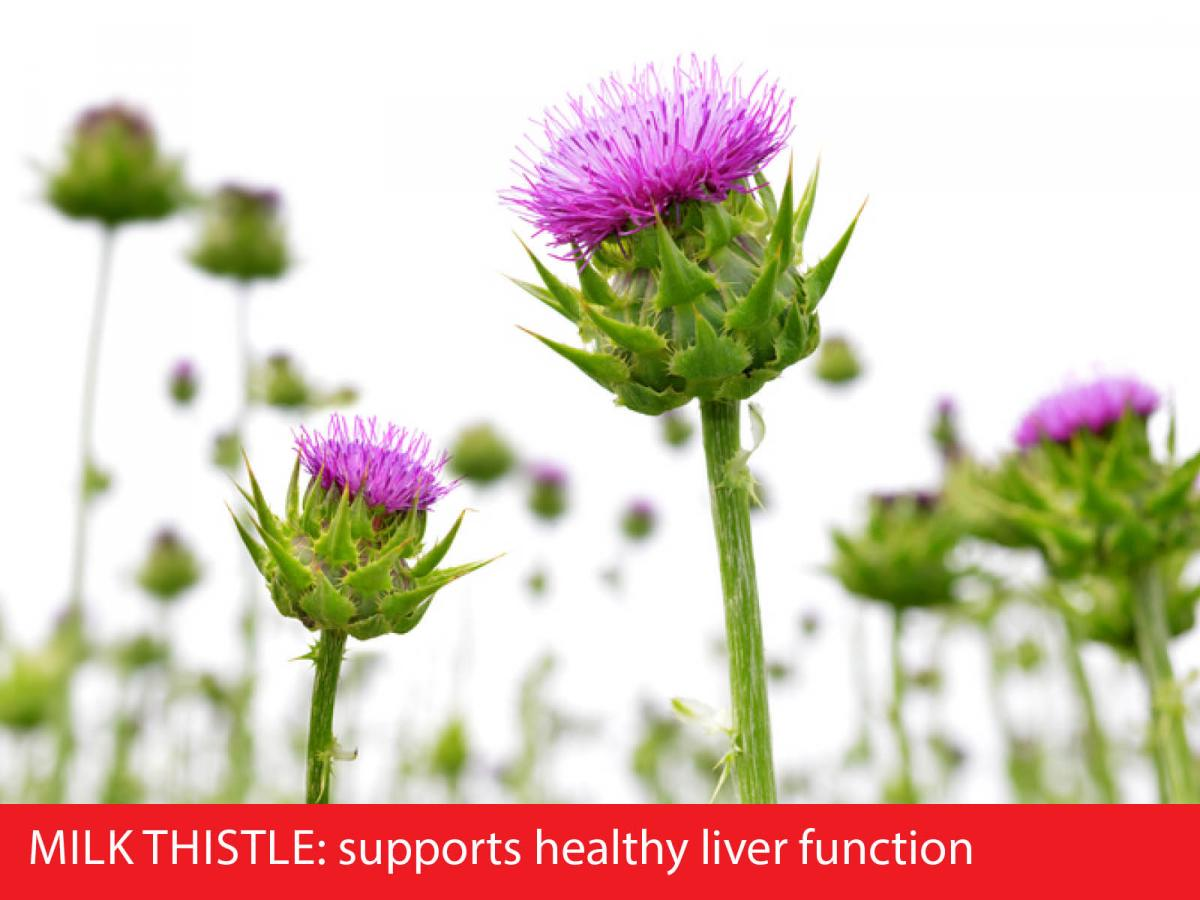 milk thistle and liver