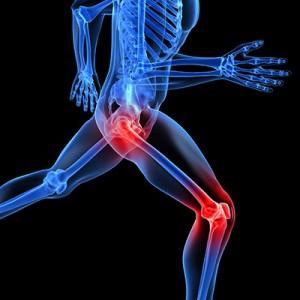 Bones & Joints