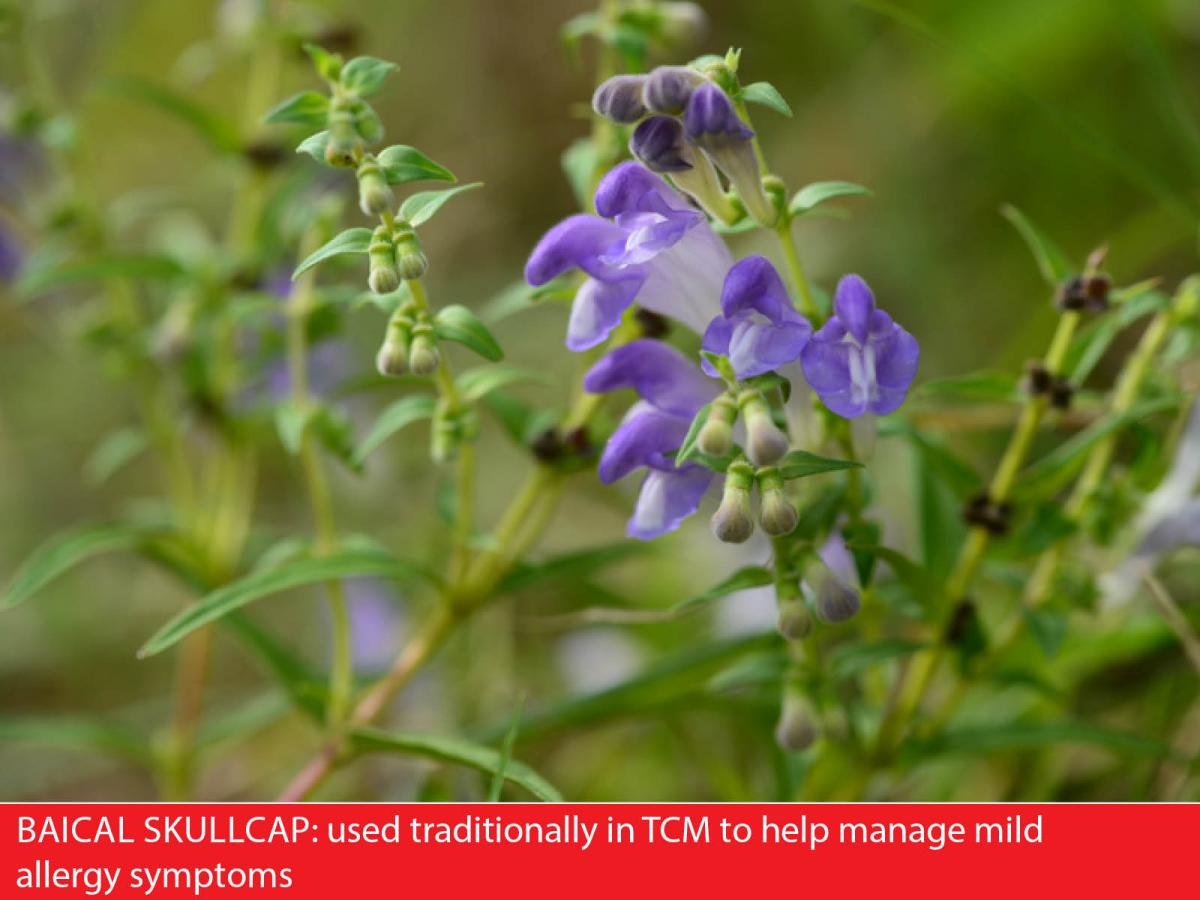 herbs for mild allergies