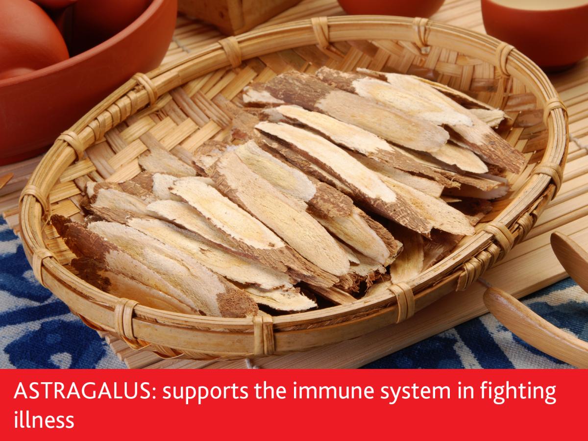 astragalus boosts immunity